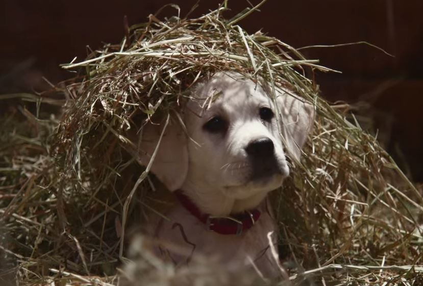 budweiser-super-bowl-spot-2015