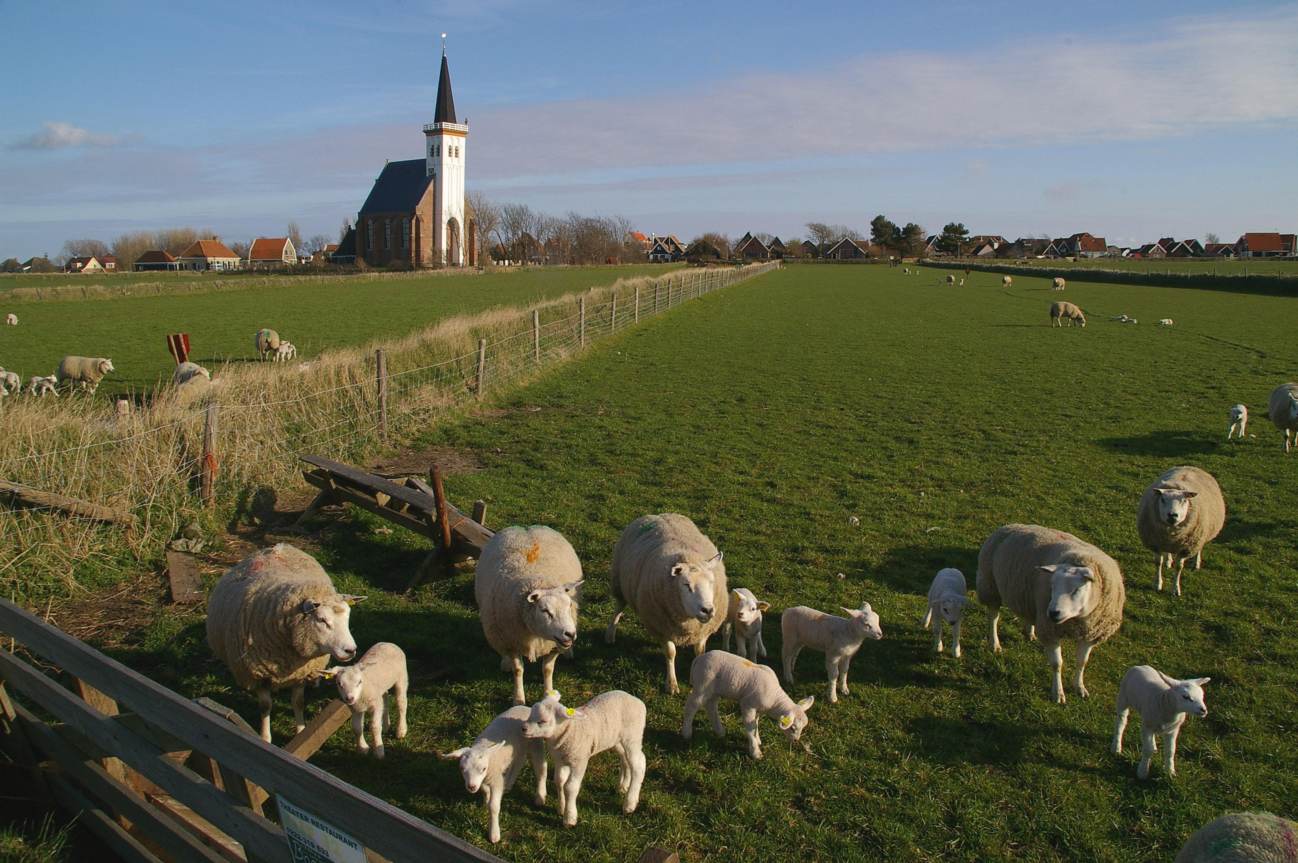 schapenenkerkjedenhoorn-FotoSytskeDijksen Foto Fitis